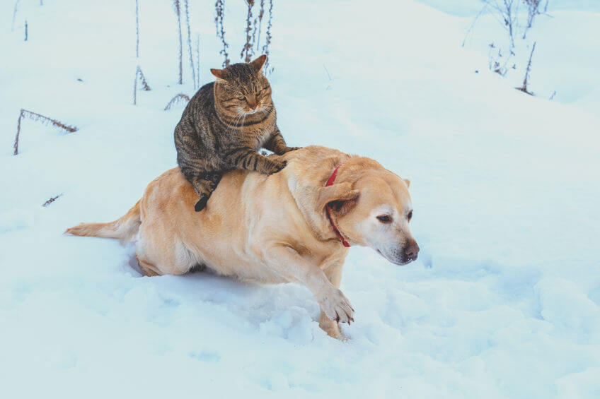 Pet Safety Tips For The Winter